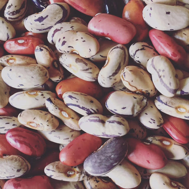 Cranberry beans from global greens sold through Iowa Food Coop